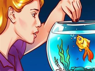 4 lợi ích không ngờ khi nuôi cá cảnh trong nhà