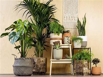5 chi tiết nội thất trong nhà tiết lộ tính cách gia chủ