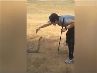 Phát hiện rắn 'khủng' ngoài đồng, thanh niên dùng chiêu có '1-0-2' khiến nó khuất phục