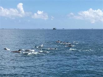 Cảnh tượng hiếm: Clip cận đàn cá heo hơn 200 con tung tăng 'nhảy múa' như vũ hội gần bờ biển Phú Yên