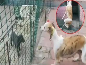 Để gặp con, chó mẹ tung 'tuyệt thế võ công' nhảy rào, cú xoay người quá đỉnh nhưng cái kết khiến CĐM cười bò