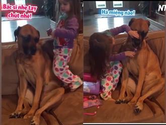 Chú chó 'cam chịu' ngồi im cho cô chủ khám bệnh siêu đáng yêu, nhìn gương mặt 'sầu đời' CĐM không nhịn được cười