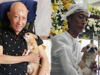 Chú chó Lucky được gia đình buộc tang trắng, quấn quýt bên linh cữu cố nghệ sĩ Lê Bình