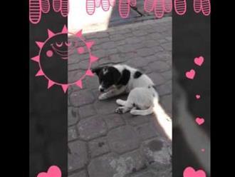 Cười rớt hàm với clip chú chó say 'quắc cần câu', đi không nổi phải nằm vật vạ đợi chủ ứng cứu