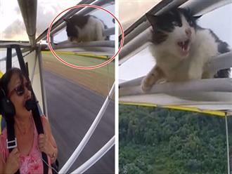 Lên máy bay chơi nhưng ngủ quên, chú mèo tá hỏa mở mắt ra thấy mình đang lủng lẳng trên không