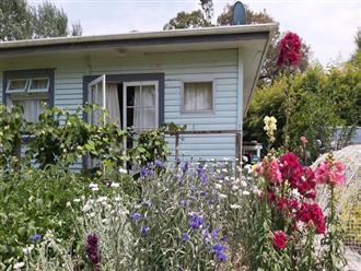 Cuộc sống yên bình của người đàn ông trong ngôi nhà nhỏ và khu vườn đầy ắp rau xanh, trái ngọt