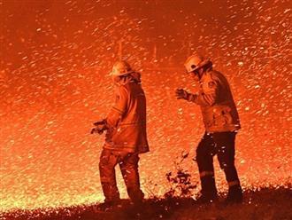 Dàn sao Việt đau xót trước thảm họa cháy rừng ở Úc