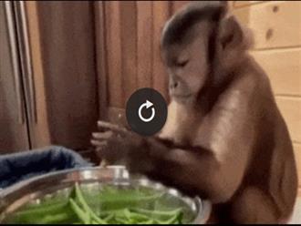 Clip thú vị: Chú khỉ cặm cụi nhặt rau cùng cô chủ, dân mạng bất ngờ nhất là điểm này