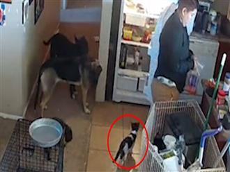 Lẻn vào tủ lạnh 'chơi trốn tìm', mèo nhỏ khiến cô chủ một phen hú vía và cái kết bất ngờ