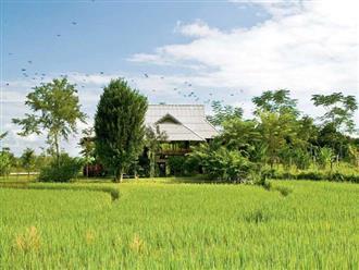Nhà cấp 4 với thiết kế đẹp lãng mạn giữa cánh đồng lúa xanh tươi ở ngoại ô