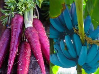 Những loại rau củ - trái cây có màu sắc khác lạ như đến từ ngoài hành tinh, nhưng chúng đều có thật và còn ẩn chứa bí mật gây sốc