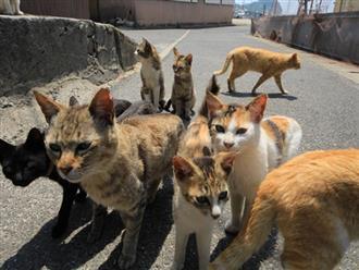Tìm ra thủ phạm đứng đằng sau cái chết của hàng chục con mèo trên đảo Nhật Bản, lời khai khiến nhiều người cảm thấy bất bình