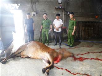 Phát hiện đối tượng mua trâu bò đã chết từ vùng dịch về xẻ thịt bán kiếm lời