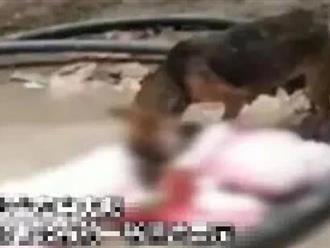 Thảm cảnh ở Ấn Độ: Có thi thể bị chó hoang cắn xé, người dân bất lực dùng cả lá cây làm khẩu trang