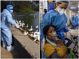 Ấn Độ 'gồng mình' đối mặt với mối đe dọa 'chết chóc' từ hai dịch bệnh nguy hiểm không kém COVID-19