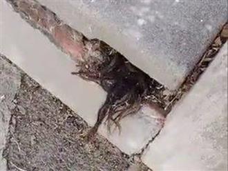 Đi qua một ngôi mộ bị nứt trong nghĩa trang, người đàn ông phát hiện điều kinh hoàng