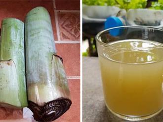 1 bộ phận của cây chuối chữa loét dạ dày cực tốt, người Việt vứt cho lợn ăn mà không biết