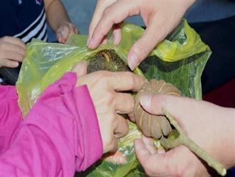 Nghệ An: Rủ nhau ăn hạt cây ngô đồng, 3 học sinh tiểu học nhập viện do ngộ độc