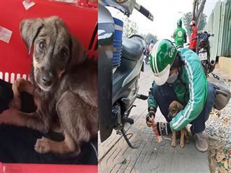 Ánh mắt ám ảnh của chú cún trơ xương nằm bên đường và hành động 'nghìn like' của tài xế Grab