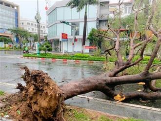 Bão số 9 áp sát Quảng Ngãi, gió rít liên hồi, cây đổ, mái tôn bị thổi bay
