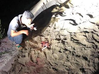 Bé trai 7 tuổi bị 10 con chó lao vào tấn công ở Hưng Yên đã tử vong