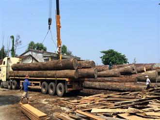 Bị hàng tấn gỗ đè xuống người khi tháo dỡ từ xe tải, tài xế ở Quảng Nam tử vong