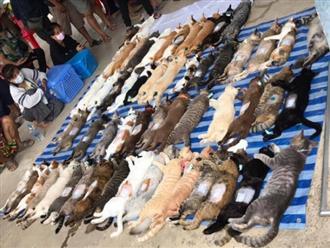 """Bức ảnh cả trăm chú mèo nằm bất động la liệt tưởng như một vụ """"thảm sát"""" nhưng sự thật phía sau lại khiến ai nấy ngã ngửa"""