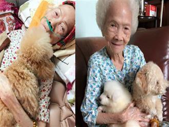Bức ảnh con chó nép bên bà ngoại lúc hấp hối và câu chuyện cảm động do cháu gái kể