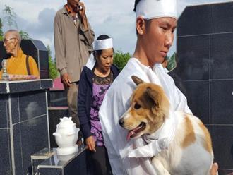 Cái chết uất hận của chú chó đang để tang chủ