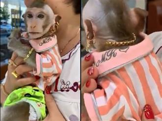 Chú khỉ được cưng chiều nhất Việt Nam: Đeo vàng từ đầu đến chân, chỉ ăn trái cây nhập, thoa kem dưỡng da cao cấp