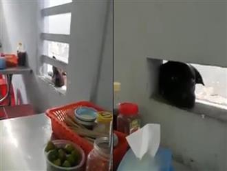 """Clip """"2 chú chó nhòm ngó xin ăn"""" được chia sẻ mạnh trên MXH vì dễ thương không ai chịu nổi"""