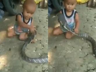 Clip bé trai đánh bôm bốp vào đầu rắn khiến cộng đồng mạng tức giận