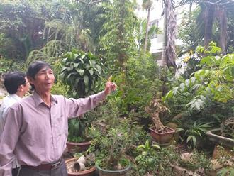 Đất trăm triệu đền bù vài chục ngàn, Đà Nẵng nói gì?
