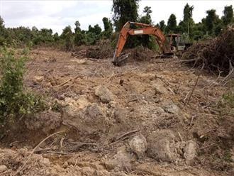 Giao đất sai hơn 587 ha, sau 7 năm thu hồi được gần 94 ha
