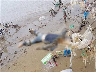 Thanh Hóa: Phát hiện thi thể phụ nữ đang phân huỷ mang theo tiền ngoại tệ trôi dạt vào bờ biển