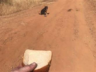 Lái xe trên đường gặp chú chó lạc chủ, tài xế đến giúp thì con vật từ chối, định rời đi trước khi hốt hoảng thấy cảnh tượng gần đó