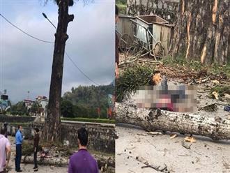 Đang đi bộ trên đường, nam thanh niên bị cành cây rơi trúng đầu tử vong
