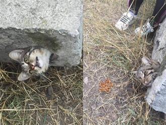 """""""Nghẹt thở"""" cuộc giải cứu chú mèo bị kẹt trong ống bê tông nhỏ hẹp: Lần sau thì chừa nghịch dại nhé!"""