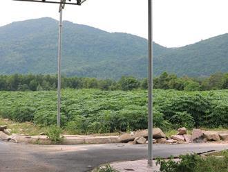 Những khu đất do Địa ốc Alibaba phân phối đất nền bị cưỡng chế giờ ra sao?