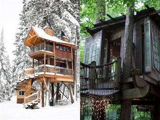 Những ngôi nhà trên cây tuyệt đẹp khiến bạn mộng mơ đến một cuộc sống chan hòa bên thiên nhiên