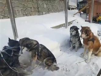 Phẫn nộ cảnh người đàn ông đối xử tàn nhẫn với đàn chó, tiết lộ của những người xung quanh càng gây bức xúc hơn