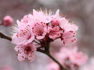 Trồng hoa tết vào tháng mấy để hoa nở đúng dịp tết?