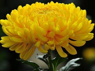 Những loại hoa nào nên chọn cắm bàn Thờ ngày tết để rước lộc vào nhà trong năm mới?