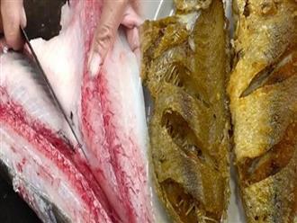 4 loại cá càng ăn càng độc, có loại được cảnh báo gây ung thư số 1 mà mọi người vẫn vô tư ăn