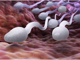 """4 thói quen hại tinh trùng: Số 1 có thể khiến tinh trùng tổn thương """"không thể sửa chữa"""""""