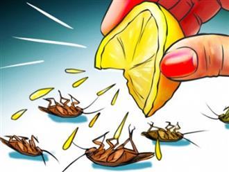 5 cách đuổi các loại côn trùng, động vật gây hại ra khỏi nhà không cần dùng hóa chất