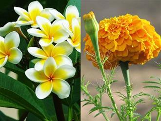 5 loại hoa phá phong thủy, đẹp thơm đến đâu cũng không nên để trong nhà