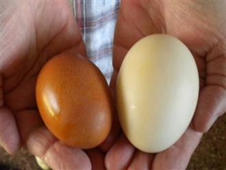 8 lý do vì sao trứng vịt tốt hơn trứng gà