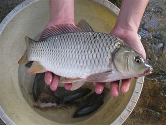 Cá có đầy chất dinh dưỡng nhưng 4 bộ phận này của cá thì nên vứt bỏ chứ đừng dại mà ăn