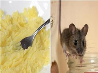 7 cách đuổi chuột ra khỏi nhà hiệu quả và an toàn không cần dùng thuốc